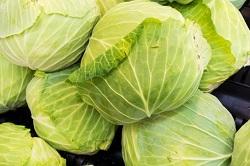 キャベツ 野菜