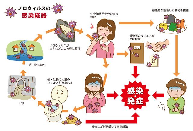 ノロウイルス 感染経路