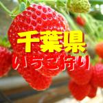 千葉県いちご狩りおすすめ人気ランキング2020!食べ放題や料金は?