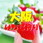大阪いちご狩りおすすめ人気ランキング2019と口コミ情報。