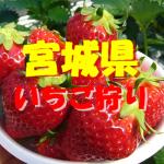 宮城県いちご狩りおすすめ人気ランキング2020!食べ放題や観光スポットは?