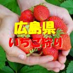 広島県いちご狩りおすすめ人気ランキング2018と口コミ情報