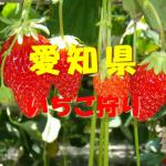 愛知県いちご狩りおすすめ人気ランキング2020!食べ放題や料金は?