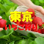 東京いちご狩りおすすめ人気ランキング2019と口コミ情報。