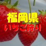 福岡県いちご狩りおすすめ人気ランキング2018と口コミ情報