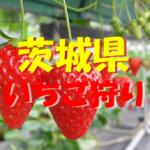 茨城県いちご狩りおすすめ人気ランキング2019と口コミ情報。