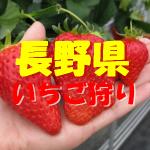 長野県いちご狩りおすすめ人気ランキング2018と口コミ情報