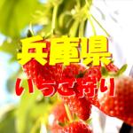 兵庫県いちご狩りおすすめ人気ランキング2017と口コミ情報