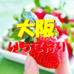 大阪府いちご狩りおすすめ人気ランキング2017と口コミ情報