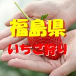 福島県いちご狩りおすすめ人気ランキング2017と口コミ情報