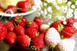 赤いちごと白いちご