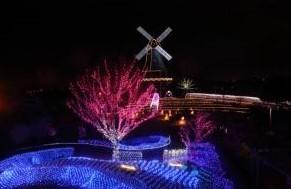 霞ヶ浦総合公園 水郷桜イルミネーション