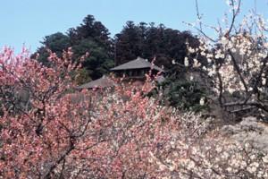 水戸偕楽園梅祭り