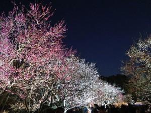 水戸偕楽園夜梅祭り