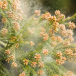 花粉症の時期2016はいつからいつまで?種類やピークは?