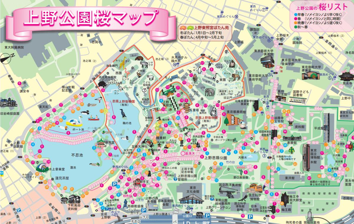 上野公園 桜 マップ