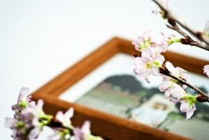 桜 思い出の写真