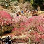 熱海梅園梅祭り