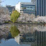 上野公園 桜 不忍池