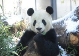 動物園 パンダ