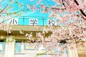 小学校 桜