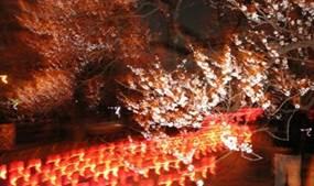 水戸梅まつり 夜梅祭