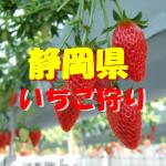 静岡県いちご狩りおすすめ人気ランキング2020!食べ放題や料金は?