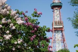 札幌 ライラック テレビ塔