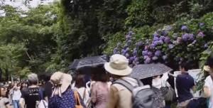 明月院 あじさいを見に来るたくさんの観光客