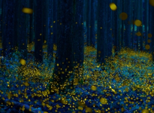 森に集まったたくさんの蛍の光