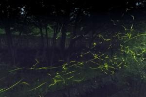 蛍の光 乱舞