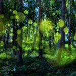 蛍の光 森