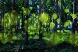 蛍 光 輝き 林