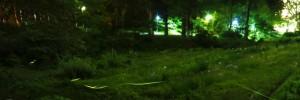 ほたる 森 ライトアップ