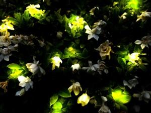 草木にとまって光るホタル