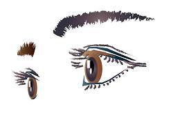 眉 目 女性 イラスト