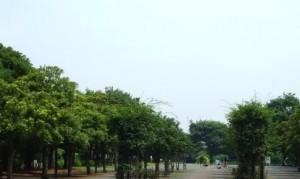 東白鬚公園