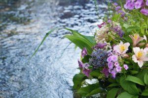 水辺に咲く花