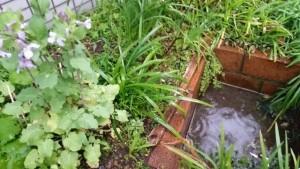 庭 水たまり 雑草
