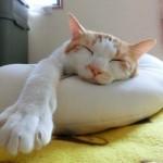 猫の暑さ対策。エアコンなしでもペットボトル、保冷剤で手作り。