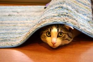 マットの下にもぐる猫