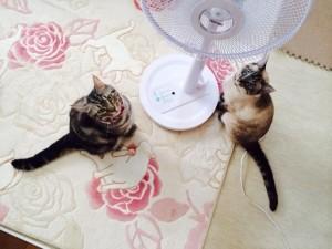 扇風機 猫