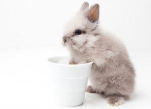 グレー ミニウサギ コップ
