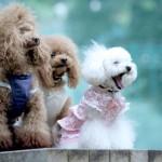 犬の抜け毛の原因と対策。ひどい時期は病気やアレルギー?