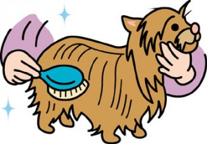 犬 ブラッシング