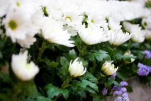 供花 菊の花
