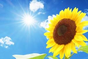 ひまわり 青空 太陽