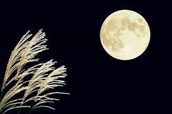 中秋の名月 十五夜 すすき