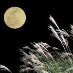 十五夜の意味。中秋の名月との違いは?すすき、うさぎの由来。