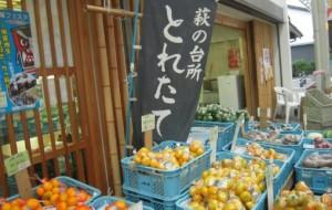 秋の萩焼祭り 出店